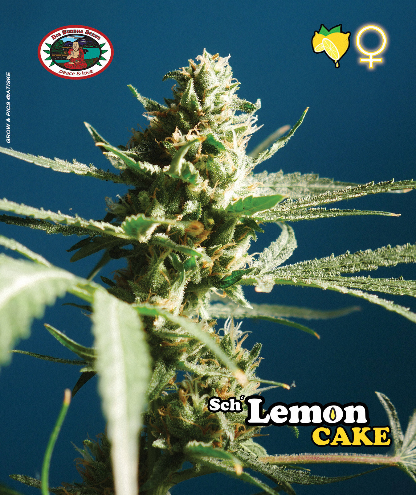 Sch'Lemon Cake Bud Shot