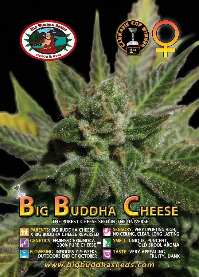 Big Buddha Cheese ™