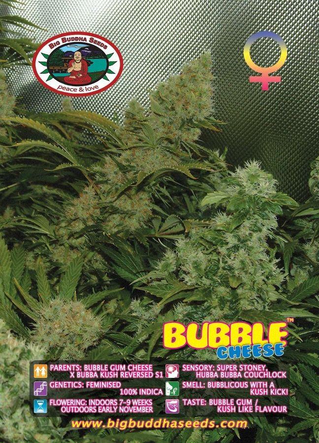 Big Buddha Bubble Cheese ™