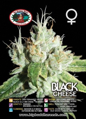Big Buddha Black Cheese ™