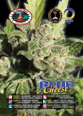 Big Buddha Blue Cheese ®™