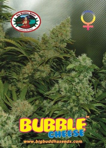 Big Buddha Bubble Cheese ™