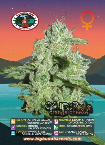 Big Buddha California Orange Cheese™