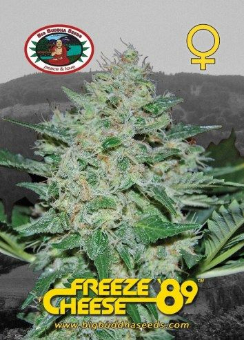 Big Buddha Freeze Cheese '89 ™