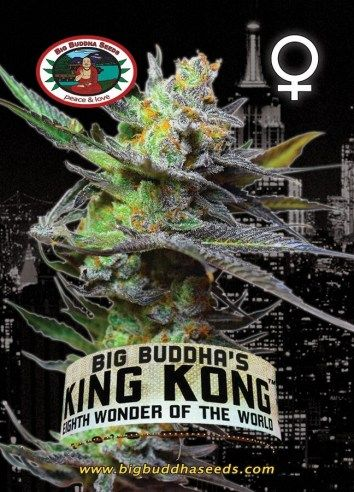 Big Buddha's King Kong ™