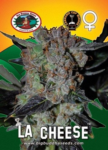 Big Buddha LA Cheese ™