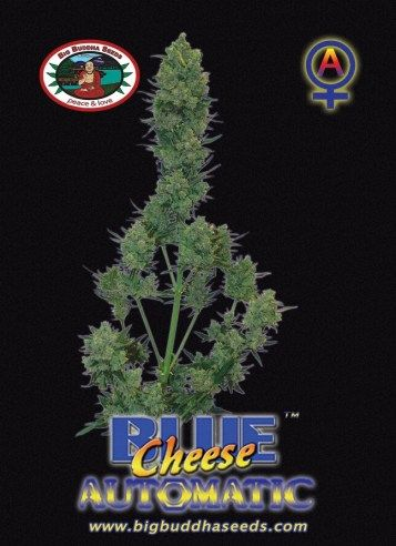 Blue Cheese AUTOMATIC ™